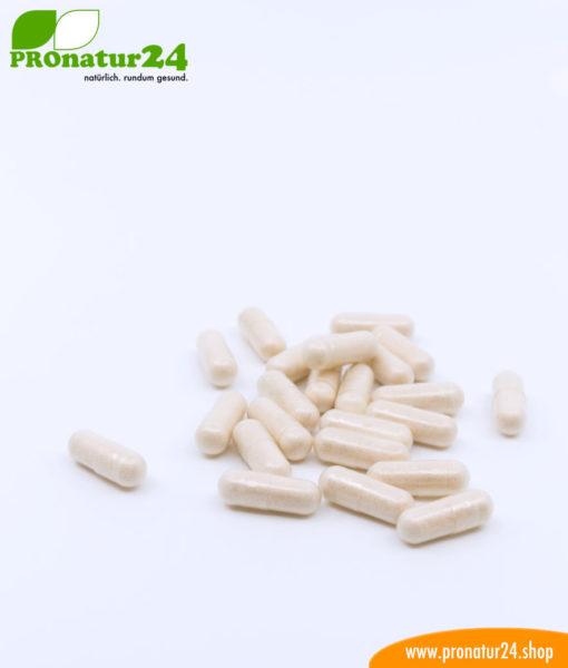 Lactoferrin, 120 mg, diätetisches Lebensmittel