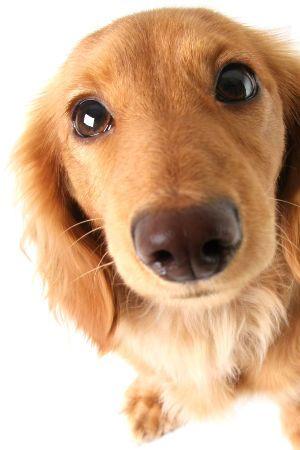Hanföl kann auch bei Hunden sehr positiv wirken und unterstützen.